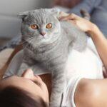 Какая порода кошек вам подходит?